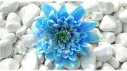 bloem-steen